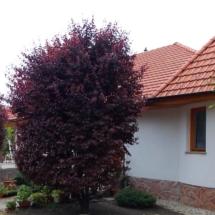 C landhausungarn-haus kauf-verkauf in Ungarn- immobilie in stadt Győr-hausverwaltung in west-ungarn-cecilia lux maklerin