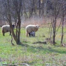 Xlandhausungarn-haus kauf-verkauf in Ungarn- immobilie in stadt Győr-hausverwaltung in west-ungarn-cecilia lux maklerin